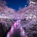 目黒川の桜の撮影ポイントとか夜桜がライトアップされる場所とか